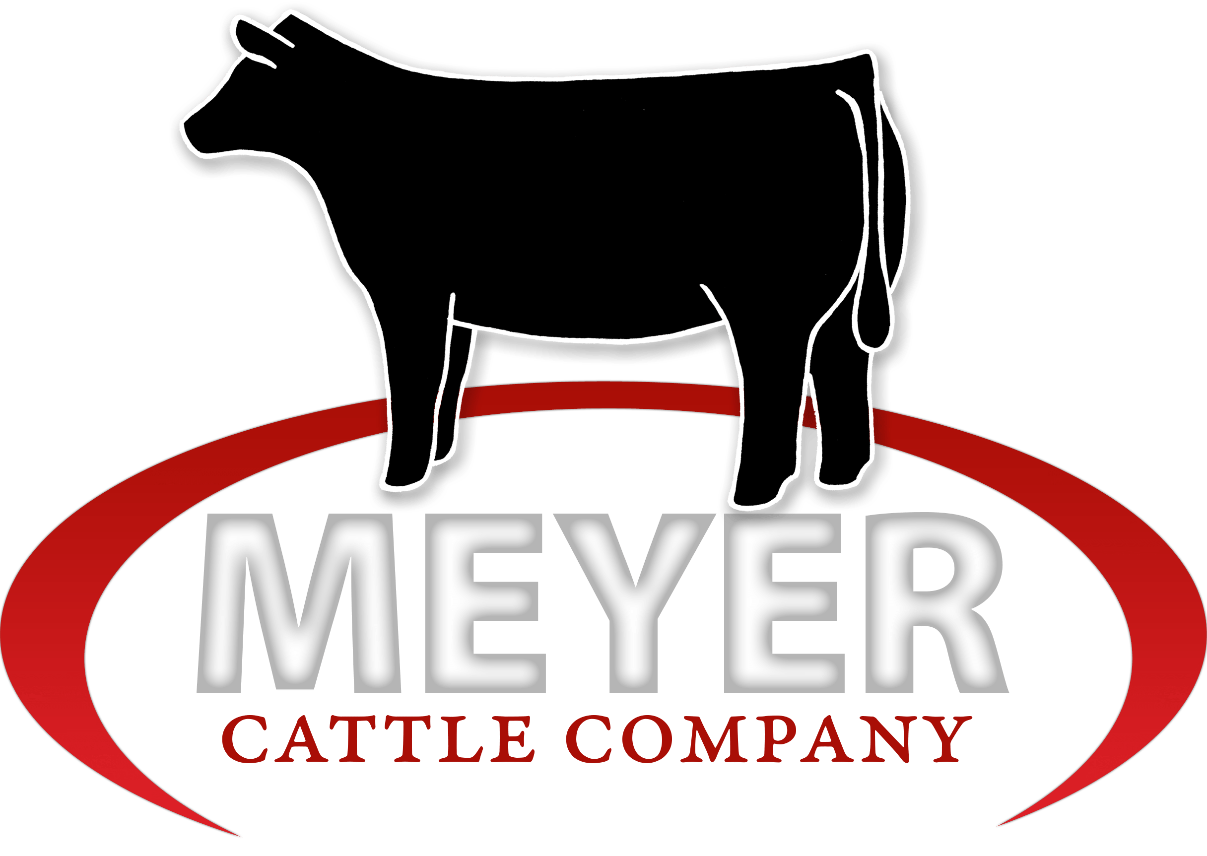 Angus Cattle Bred For Performance - Curryville, MO